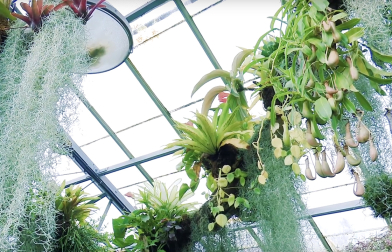 Winter Flower Festival at Allan Gardens Conservatory